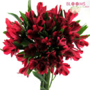 130x130 sq 1413916551916 red alstroemeria