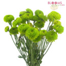 130x130 sq 1413917263260 green pompon buttom