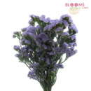 130x130 sq 1413917391461 lavender statice