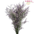 130x130 sq 1413917393784 misty blue limonium