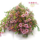 130x130 sq 1413917404187 pink wax flower