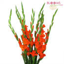 130x130 sq 1413918310017 orange gladiolus bunch