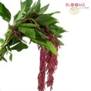 130x130 sq 1413918696344 hanging amaranthus red