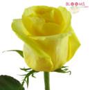 130x130 sq 1414514116391 rose tara