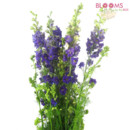 130x130 sq 1414514250245 purple larkspur