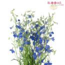 130x130 sq 1414514456694 blue delphinium