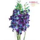 130x130 sq 1414514506822 dyed blue dendrobium orchids