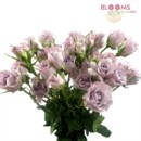 130x130 sq 1414514673404 spray rose lavender bunch