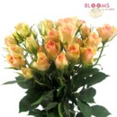 130x130 sq 1414514676052 spray rose peach   1 bunch