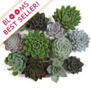130x130 sq 1414514797506 assorted succulent  best seller