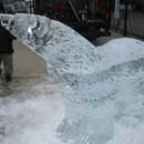 130x130 sq 1366819296277 polar bear plunge 08 7