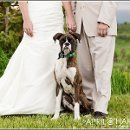 130x130 sq 1317793603707 boxerpuppyweddingphotography