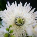 130x130 sq 1232313680203 wedding 250