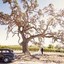 130x130 sq 1527015407 091939c8b7d99ff8 1473208445549 oak tree and car photo