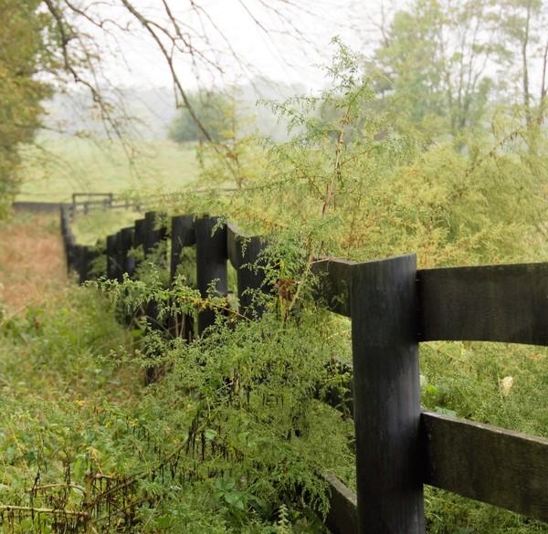 600x600 1480020223208 pasture fence