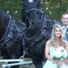 96x96 sq 1500840595564 schlosser horses