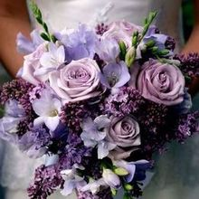220x220 sq 1515642288 8093b9c77e133444 purple weddingwire