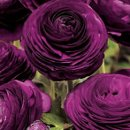 130x130_sq_1311888700862-weddingflowers3