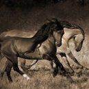130x130_sq_1312849854524-wildhorses2