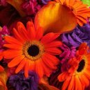 130x130_sq_1318804304591-flowers