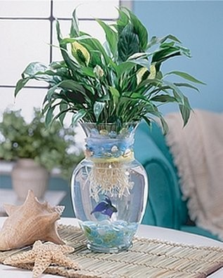 Experience using betta fish in centerpieces weddings for Peace lily betta fish