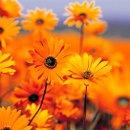 130x130_sq_1336238913868-garden