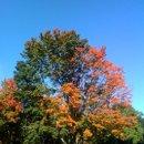 130x130_sq_1228959925416-tree1