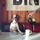 130x130_sq_1372036821614-yawning-puppy