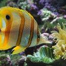 130x130_sq_1233186900328-fish