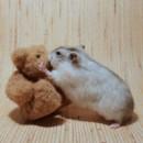 130x130 sq 1374685247315 hamsterbear