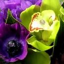 130x130_sq_1392244173324-dark-purple-wedding-flower