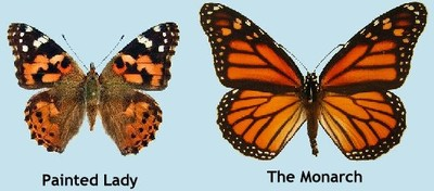 Monarch vs. Painted Ladies Butterfly Release | Weddings, Style and ... Queen Butterfly Vs Monarch