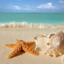 130x130 sq 1444310431041 6 starfish seashells beach sand wallpaper