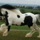 130x130 sq 1423629655374 horse