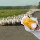 130x130 sq 1464811145753 happy goose