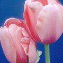 130x130 sq 1264956284902 flowers261