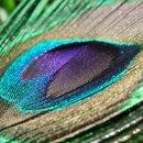 130x130_sq_1266546677928-featherphoto