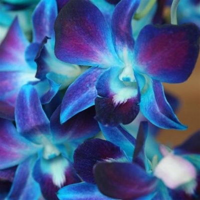 what flowers go well with blue orchids?  weddings,  wedding, Beautiful flower