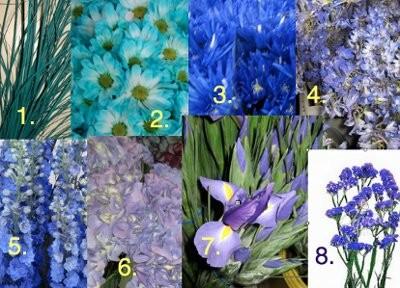 Bear Grass Dyed Blue Aqu Pompon Daisy Aqua Spider Delphinium Belladonna Dark With Flowers Names And Pictures