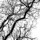 130x130_sq_1291047624341-tree