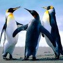 130x130_sq_1299287085948-penguins