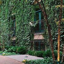 The Ivy Room - Venue - Chicago, IL - WeddingWire