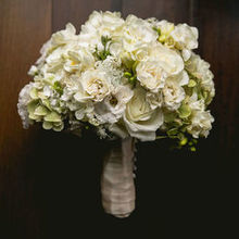 Amaryllis event decor flowers northvale nj weddingwire todo alt text junglespirit Images