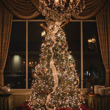 Photo for Northampton Valley Country Club Review - Great tree in cocktail hour room