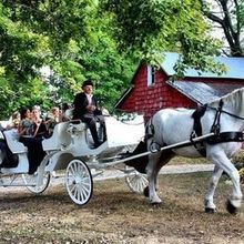 Photo for Dream Horse Carriage Company Review - Add a comment...