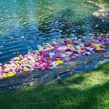 Photo for Instincts Design Studio, Ltd Review - Floating flowers in the pond