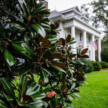 Photo for Magnolia Manor Bed & Breakfast Review