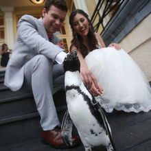 Photo for Mike Buscher Photography Review - our new penguin friend