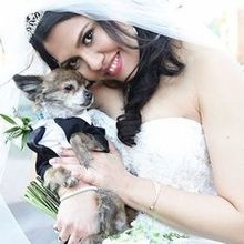 Photo for beautiful brides by Vesta Review - Bride and her dog